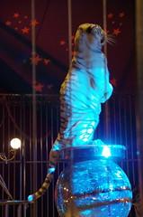 IMGP4814 (kanakacatherineb) Tags: cirque venise narbonne landri 2016 lions chameaux chiens dompteurs jongleur gymnaste