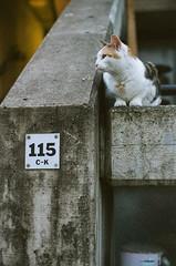 Canon T60 + Zeiss Pancolar 50mm M42 lens (Daniel Cane) Tags: canon t60 canont60 carlzeissjena carlzeiss carl zeiss pancolar 50mm m42 50mmlens m42lens m42mount m42fdadapter fuji fujifilm superia xtra 800 iso 800iso 7yearsexpired expiredfilm expired colournegative colour negative c41 london northwestlondon nwlondon nw alexandraroadestate alexandraandainsworthestate rowleyway alexandra road estate ainsworth rowley way camden concrete brutalist animal animals pet pets cat cats feline