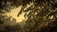 P1450352-1 (picicsoda) Tags: manual exakta natural dept depth field sun morning autumn manuallens