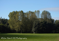 Bos der Onverzettelijke (falconoortphoto) Tags: almere bos bosderonverzettelijke nikon nikond5200 falconoort flevoland nederland