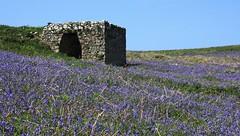 Lime Kiln - Skomer Island WT Wales - 150516 (5) (ailognom2005-Catching up slowly.) Tags: skomerisland pembrokeshire wales history limekiln britishlandscape britishwildflowers wildflowers wildlifetrust