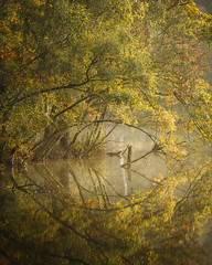 A touch of Autumn at Delamere Forest (colinbell.photography) Tags: