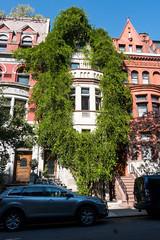 Ivy Brownstone (UrbanphotoZ) Tags: brownstone ivy overgrown excessive upperwestside manhattan newyorkcity newyork nyc ny