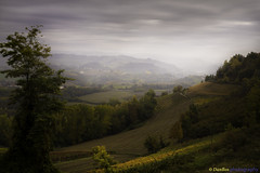 Langhe - Piedmont (Italy): Autumn evening (www.danbos.it) Tags: autumn langhe hills vineyard wine elitegalleryaoi bestcapturesaoi