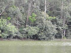 DSCN0257 (apacheizabel) Tags: lago pássaros árvores céu pinhas tronco espelho dágua queroquero rolinhas banco no bosque família de galinhas passeio parque centro aeroespacial da aeronáutica cta são josé dos campos sp