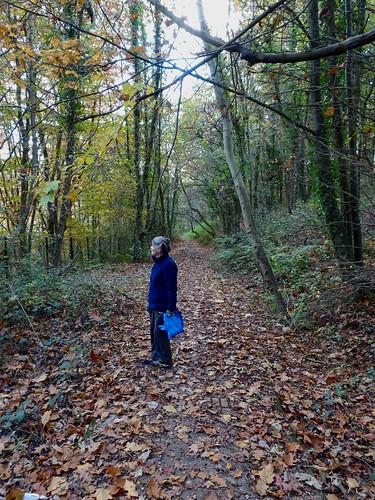 Autumn Leaves... Springvale, Cwmbran 4 November 2016