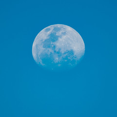 Early evening moon (Merrillie) Tags: australia daytime moon lunar bluemoon earlyevening