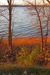 Riverside colours at sunset (ryerson.diane) Tags: ottawa river