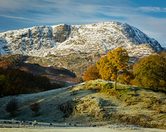 Autumn Meets Winter (Alex Wrigley) Tags: landscape landscapes tree snow autumn fall winter trees sunrise dawn beauty beautiful nature natural countryside rural lakedistrictphotography lakedistrict landscapephotography naturephotography collision