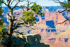 At the Edge (Herculeus.) Tags: 2016 az bouldersstonerocks canyon cliffs cloudless erosion fall grandcanyonnp ledge oct southrim trees outdoor outside landscape landscapes 5photosaday