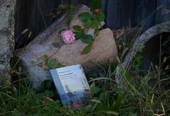 16 novembre 2016 ...che cos' la nostalgia? (adrianaaprati) Tags: rosaantica rosa petal petals campagna countryside composizione nostalgia libro sentimento homesickness