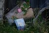 16 novembre 2016 ...che cos'è la nostalgia? (adrianaaprati) Tags: rosaantica rosa petal petals campagna countryside composizione nostalgia libro sentimento homesickness