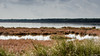 lagune de S'Ena Arrubia (Patrice Dx) Tags: sardaigne plage oritzo paysage couleur ciel sena arrubia senaarrubia lagune flamands