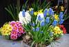 A TUTTE LE DONNE.... (Skiappa.....v.i.p. (Volentieri In Pensione)) Tags: giornatacontrolaviolenzasulledonne donne fiore fiori bouquet composizionefloreale colori panasonic lumix skiappa explore56