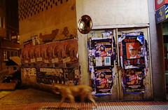 Corua by night - Dog walk. (Dirk Bontenbal) Tags: arquitectura architecture borroso blur corua city ciudad flashapagado galicia handheld k50 walking lacorua nightphotography noflash notripod noche night pentax paseando reflections reflejos ricohpentax streetphotography streetart urbano urban urbantexture unsharp dog perro posters