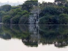 IMG_3029 (mohandep) Tags: birding lake bangalore madivala karnataka nature wildlife t