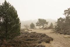 IMG_7583 (Marcel Hendriks) Tags: veluwe heath mystical trees mist