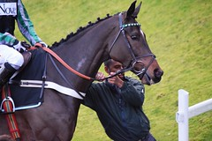 Altior (hyperionone) Tags: horse horseracing thoroughbred altior highchaparral nationalhunt sandown chaser winner nickyhenderson supremenoviceshurdle cheltenham hentyviiinoviceschase handsome noelfehilly plaits