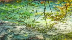 Sinfona de colores en el nacimiento del Ro Urederra - Baquedano-Sierra de Urbasa-Navarra. (ANDROS images) Tags: andros images photos fotos fotoandros androsphoto fotoandros lugares places sitiosespeciales franciscodomnguez interesante naturaleza naturalezaviva amoralanaturaleza imgenesdenuestromundo slotenemosunatierra planetatierra amarlatierra cuidemoslatierra luz color tonos portierrasespaolas nuestro unahermosatierra reflejosdeluz pasin viviendo pasinporlafotografa miradas fotografas atravsdelobjetivo elmundoenimgenes pictures androsphoto photoandrosplaces placesspecialsites interesting differentnaturelivingnature loveofnature imagesofourworld weonlyhaveoneearthplanetearth foracleanworldlovetheearth carefortheearth light colortones onspanishterritoryourworld abeautifulearth lightreflection living passionforphotographylooks photographs throughthelens theworldinpicturesnikon nikon7000 grupodemontaairis androsimages franciscodomnguezrodriguez urederra rourederra sierradeurbasa baquedano