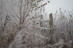 Frosty Morning Fence (Pittypomm) Tags: winter fence frost frosty fog foggy white