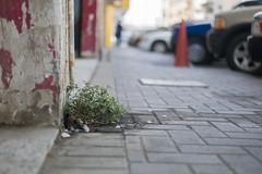 Life (heshaaam) Tags: life plant flowers street bahrain decay