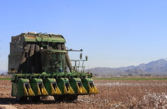 Harvest Time (BCooner) Tags: harvester goodyearaz cotton agriculture