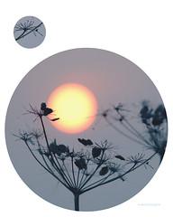 poetry (art-dara) Tags: sun color nature illustration circle colorful poem bokeh circles dara photoillustration   poerty      darapilugina darapilyugina