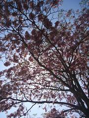 Macuilis (Caneckman) Tags: naturaleza primavera sol arboles cielo tabasco