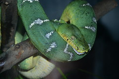 DSC_6582 (~BJG~) Tags: family animals zoo snake indy sunny emerald mothersday indianapoliszoo