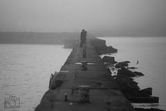 Young Love; Port Washington, WI (RyanLeeVisuals) Tags: ocean blackandwhite bw lighthouse lake love water fog wisconsin pier couple head michigan great young greatlakes portwashington