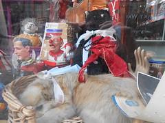 Window Display - Islington (Chris Draper) Tags: dog humorous gothic surreal stuffeddog morbid