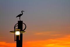 Lamp Post at River Front (Kenny Shackleford) Tags: sunset sky art lamp alabam