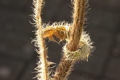 I've got you (Wo Mue Ov) Tags: pflanze blatt gegenlicht