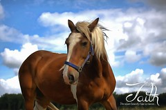 Faith. (Michel_Derksen) Tags: horse love faith gypsy horsehead tinker paard irishcob paardenhoofd