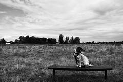 Hob Moor, Dog (Rawturnip) Tags: hobmoor