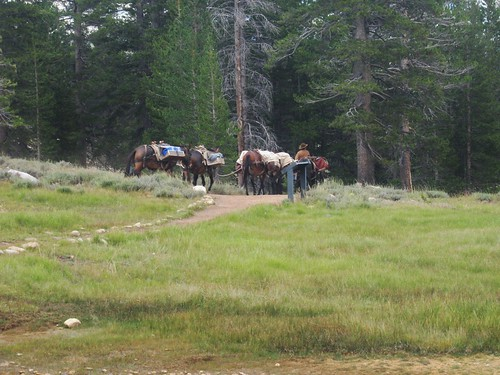 Pack train from Glen Aulin camp - Tuolumne 8-12-2014  -- for a larger image LEFT CLICK on the image