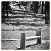 Big Hole NB ~ bench on the trail (karma (Karen)) Tags: trees bw texture monochrome montana shadows trails pines paths shadowplay benches squared 1877 hbm nrhp bigholevalley usparks nezperceindians nezpercewar benchmonday bigholenb