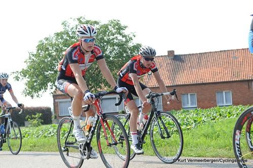 Geel Oosterlo  (177)