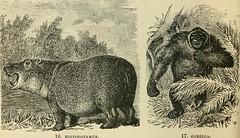 Anglų lietuvių žodynas. Žodis chacma baboon reiškia chacma pavianas lietuviškai.