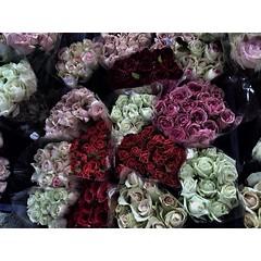 """- Gray day - • ใครบอกว่าสีเทาๆ มันหมายถึงความเศร้า บางทีเราอาจกำลังมีความสุขอยู่บนความรู้สึก """"สีเทา""""อยู่ก็ได้นะ • • #กุหลาบสีทึมๆเทาๆก็สวยดีน๊า  #gray #rose #flowers #naturelovers #magenta #scarlet #symbolic #tried #loneliness #happiness #day #different"""