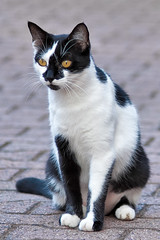 (Candideou l'optimisme) Tags: cats gatti bassotta fujifilms5pro nikonaf702104