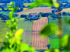 Recanati, Marche, Italy - contryside -by Gianni Del Bufalo (CC BY-NC-SA) (bygdb - Gianni Del Bufalo (CC BY-NC-SA)) Tags: italy tourism nature rural landscape italia campagna recanati marche marken itali macerata marches italiancountryside contryside marcheregion rurale campiaitaliana themarches  campoitaliano italiantourism    destinazionemarche   recanatimacerata italienischenlandschaft italakamparo    destinazionemarche regionedellemarche carlinoancona