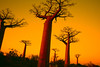 Deforestation in the Amazon, Anthony Asael, Brazil (Connect4Climate) Tags: africa road trees sunset red tree nature yellow night sunrise garden big ally madagascar baobab hugetree baobaballey treetreessunsetsunriseallyroadbignatureyellow