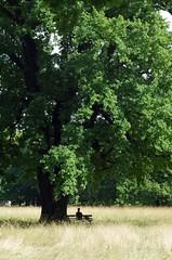 Bench under tree in Dresden (Jos Kroezen) Tags: park summer tree field bench dresden relaxing