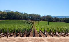 The Views (Dan Hiris) Tags: california vineyard winery napa
