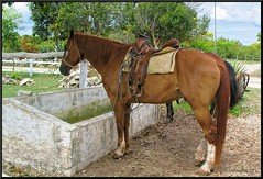 Cozumel, Mexico (Taking pics, and eventually posting them!!!) Tags: horse canon mexico powershot riding mayan mayanruins cozumel horseback powershota640 paintshopprox6 pspx6