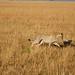 African safari, Aug 2014 - 072