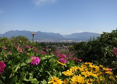 Standing proud (Ruth and Dave) Tags: city pink dahlia flowers panorama mountains yellow vancouver garden view colourful bedding queenelizabethpark annuals