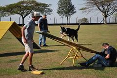 DSC_0095 (Clube de Cãompo Hotel Fazenda para Cães) Tags: votorantim estimacão hotelfazendaparacães clubedecãompohotelfazendaparacães