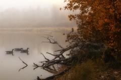 The Heart Of Life (karenhunnicutt) Tags: autumn fog creek river fallcolors canadiangeese moor exploreminnesota minneapolisphotographer karenhunnicutt karenmeyer minnesotaautumn karenhunnicuttphotography karenhunnicuttphotographycom minneapolisfineart artandsoulstudios minnesotatourisim